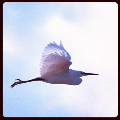 Photo du jour: Suivre l'ange